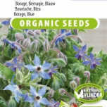 Borage Blue EKO - Borago officinalis