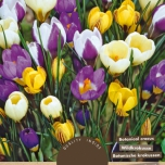 Crocus Botanical Mix