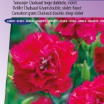 Carnation Magenta – Dianthus Chabaud