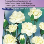 Carnation Jeanne Dionis – Dianthus Chabaud