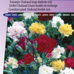 Carnation Chabaud Mix – Dianthus Chabaud