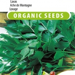 Lovage EKO - Levisticum Officinalis