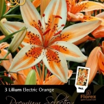 tuincentrum koeman lilium asiaticus orange electric