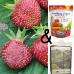 Cultivation package Strawberry Cherryberry