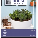Aloe Mixture - Buzzy House Plants